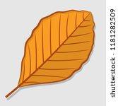Beech Autumn Leaf Isolated On ...