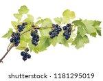 macro of black currant branch... | Shutterstock . vector #1181295019