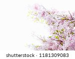 beautiful full bloom cherry... | Shutterstock . vector #1181309083