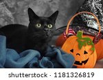 Stock photo cute black cat and halloween decor near grey wall 1181326819