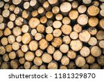 trunks of trees with denoted... | Shutterstock . vector #1181329870