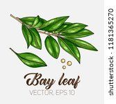 bay leaf  culinary herb  spices ...   Shutterstock .eps vector #1181365270