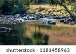 Colours of Green in the River Bed - Taken on the Allyn River near Gresford, NSW, Australia