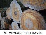 cut logs in a beech forest | Shutterstock . vector #1181465710