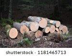 cut logs in a beech forest | Shutterstock . vector #1181465713