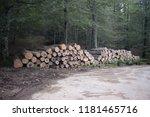 cut logs in a beech forest | Shutterstock . vector #1181465716
