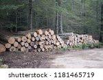 cut logs in a beech forest | Shutterstock . vector #1181465719