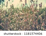 chaotic meadow of a mass of...   Shutterstock . vector #1181574406