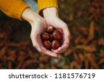 Woman Holding Chestnuts In Her...