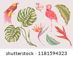 tropical set collection of... | Shutterstock .eps vector #1181594323