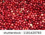 red ripe cranberry background ... | Shutterstock . vector #1181620783