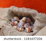snail shells in a jute canvas... | Shutterstock . vector #1181657206