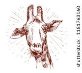 a pretty giraffe. hand drawn... | Shutterstock .eps vector #1181763160