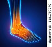 human foot anatomy illustration.... | Shutterstock . vector #1181797270