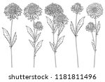 vector set with outline aster... | Shutterstock .eps vector #1181811496