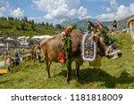 engstlenalp  switzerland   4...   Shutterstock . vector #1181818009