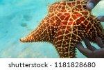 amazing adventure underwater...   Shutterstock . vector #1181828680