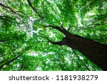 forest trees nature green wood... | Shutterstock . vector #1181938279