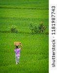 balinese woman walking through... | Shutterstock . vector #1181987743