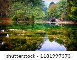 beautiful forest landscape .... | Shutterstock . vector #1181997373
