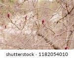 amazing magnolia flowers in the ... | Shutterstock . vector #1182054010