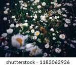thousands of tiny colorful... | Shutterstock . vector #1182062926