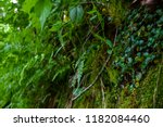 Moss Covered Rock Cliff With...