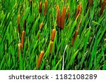 green details of colored plants ...   Shutterstock . vector #1182108289