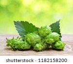 hop cones  humulus lupulus  on... | Shutterstock . vector #1182158200