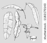 banana palm leaf. tropical... | Shutterstock .eps vector #1182170143