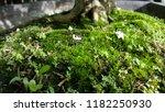 close up grass mos | Shutterstock . vector #1182250930