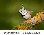 crested tit sitting on... | Shutterstock . vector #1182278326
