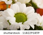 garden flower close up studio... | Shutterstock . vector #1182291859