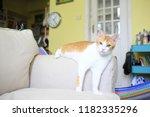 smart ginger cat | Shutterstock . vector #1182335296