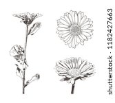 vector set of flowers drawings  ... | Shutterstock .eps vector #1182427663