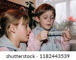 volycia  volyn   ukraine  ... | Shutterstock . vector #1182443539