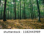 autumn forest trees. nature... | Shutterstock . vector #1182443989