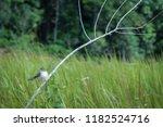 little bird landing on a branch ... | Shutterstock . vector #1182524716