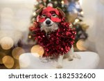 Stock photo jack russell dog in red new year garland and mask christmas lights tree background 1182532600