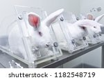 experimental rabbits in the... | Shutterstock . vector #1182548719