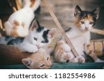 Stock photo color kittens play together 1182554986
