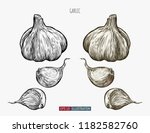 hand drawn garlic. template for ... | Shutterstock .eps vector #1182582760