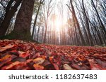 yellow  orange and red autumn... | Shutterstock . vector #1182637483