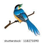 painting of a bird on the white ... | Shutterstock . vector #118273390
