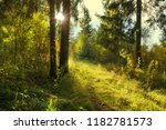 forest landscape. mixed wood... | Shutterstock . vector #1182781573
