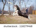 Blue Border Collie Dog Catchin...