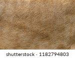 closeup real lion skin texture. ... | Shutterstock . vector #1182794803