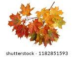 branch of autumn maple leaves...   Shutterstock . vector #1182851593