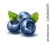 vector realistic raw blueberry... | Shutterstock .eps vector #1182864370