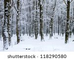 Beautiful Winter Forest  And...